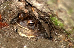 Toad in Shelter
