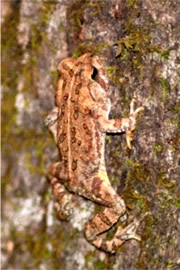 Toad on a Tree