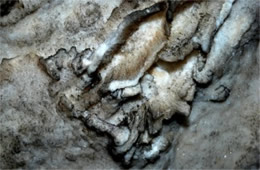 Mammoth Cave Gypsum Formations