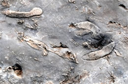 Permian Reef Fossils