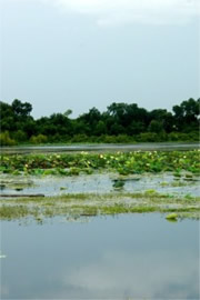 Lake with Aquatic Plants