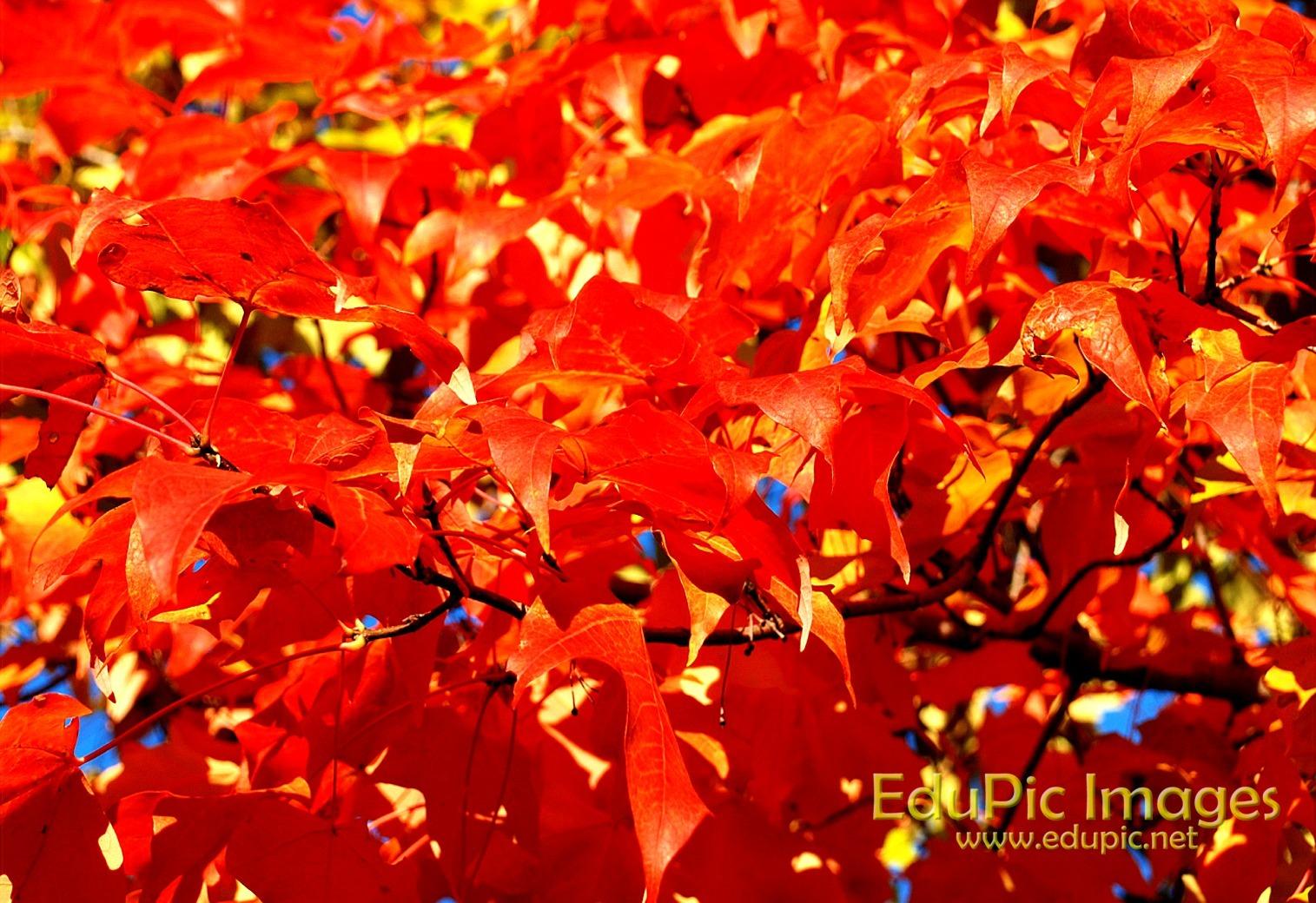 Fall Colors Desktop