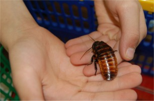 Student Holding a Cockroach